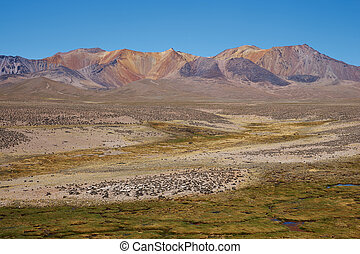 Altiplano - The altiplano, around 4000 metres above sea...