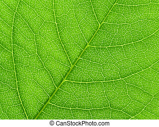 Vibrant green leaf macro close up natural background.