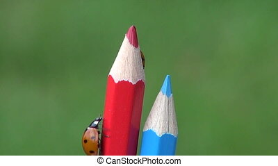 ladybird ladybug on artist pencil - two beautiful insect...