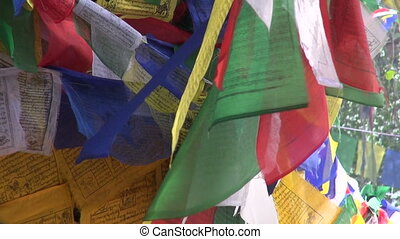 Buddhist praying flags on old tree