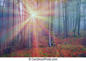 Rays in the Carpathian forest - Alpine autumn, scenic...