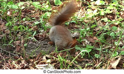 Cute squirrel on ground in the park