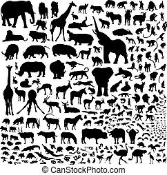 all the animals of Africa - Over 200 silhouettes fauna of...