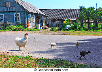 Big chicken family - A hen with chickens feeding in the...