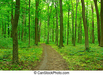 green forest - Path in spring green forest