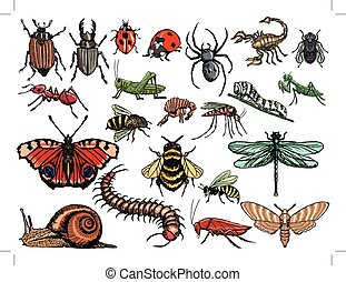 set of insects - set of sketch, editable illustrations of...