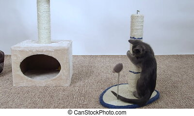 Kitten have fun playing with mouse toy attached to...