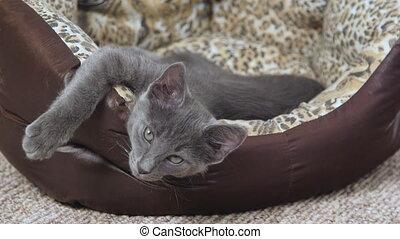 Cute sleepy kitten yawning in cat bed