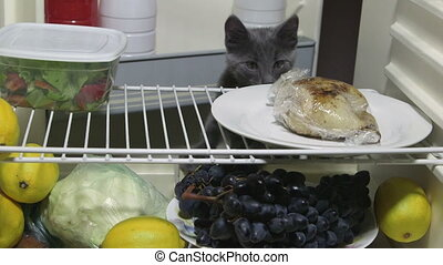 Hungry kitten looking for food inside domestic fridge