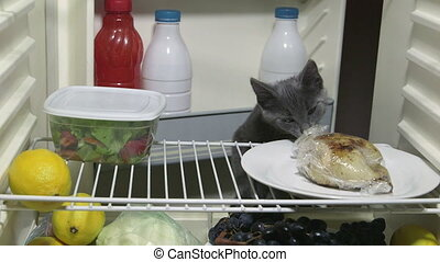 Hungry cat looking for meat in the domestic refrigerator