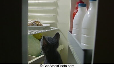 Cute kitten looking for food inside domestic fridge at night