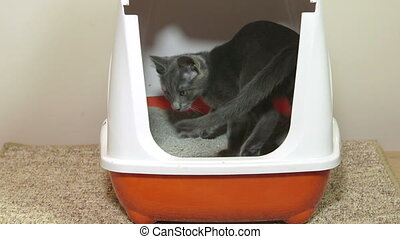 Cat using closed litter box