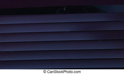 Gunman in balaclava peeking out through the blinds lit by...