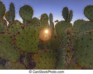 Prickly desert cactus with morning