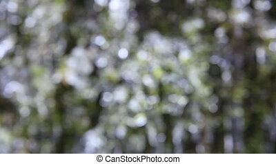 Bokeh of Moss and Icicle Background - Out of Focus Bokeh of...