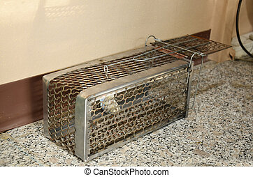 rat cage trap - Mackerel fish for A rat cage trap containing...