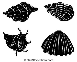 Sea Shell - Black Silhouette Collection Of Sea Shell