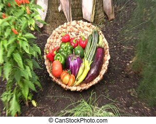 basket of fresh vegetables - zoom to basket of fresh...