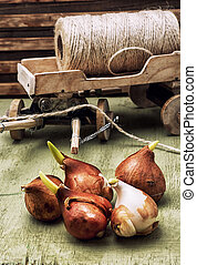 spring protestnymi bulbs plants - miniature symbolic cart...