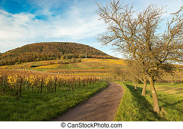 Vineyards in Pfalz at autumn time,