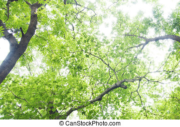 Natural background of green plants