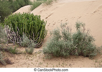 Sand dunes at Thar desert, India