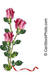 rose, bianco, rosso, fondo