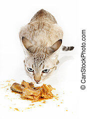 cat smell food