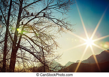 Sun Worshipers - Bald eagles sitting in a tree watching the...