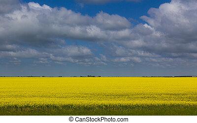 Clouds over wheat field Saskatchewan - Bleu sky clouds over...