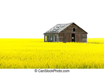 Old wooden abandoned house on the yellow field isolated