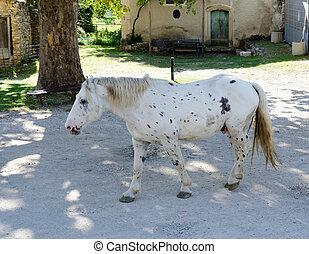white horse dappled black