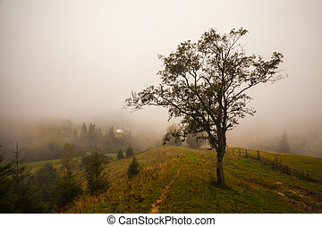 Lonely tree on the hill, above the misty valley in Bohemian Switzerland