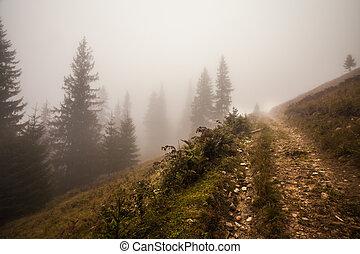 Mystical deep fog in a forest