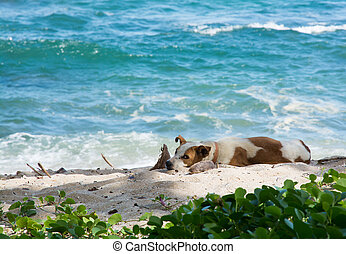 Dog resting on beach Dog with collar in the sand with ocean...