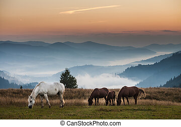 Mountain landscape with grazing horses, Ukraine, animals