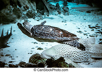 sealife - sea turtle and bottom sharks