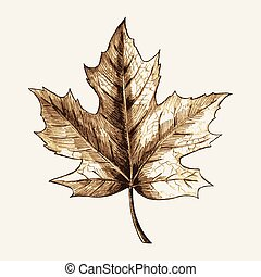 Maple Leaf Sketch