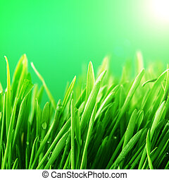 grass nature background - water drops on grass blade nature...