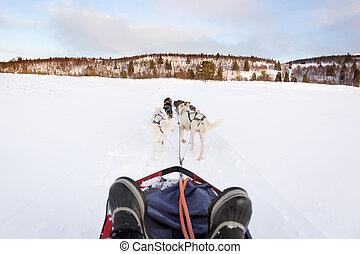 sledding, com, Husky, cachorros, em, a, Inverno,