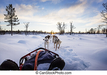 Dog sledding with huskies in beautiful sunset - Musher and...
