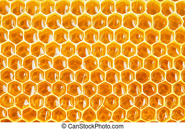 honeycomb cells natural background close up