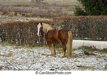 Horse in the meadow frozen - horse in a meadow