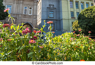edificio, y, flor,