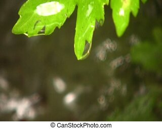 Water dripping off a leaf beside a waterfall
