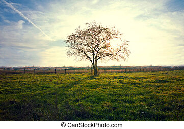 Nature concept. - Lonely tree on the field with green fresh...