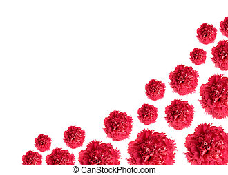 carnation flowers border pattern - carnations isolated on...
