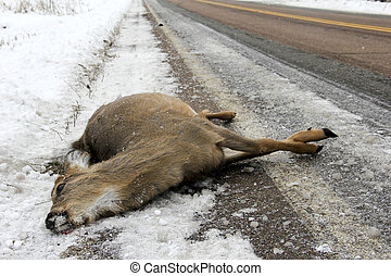 Dead deer after an accident with a car - Dead deer lying on...
