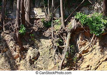 exposto, solo, árvore, devido, Erosão, raizes