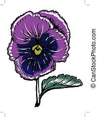 pansy - hand drawn illustration of pansy